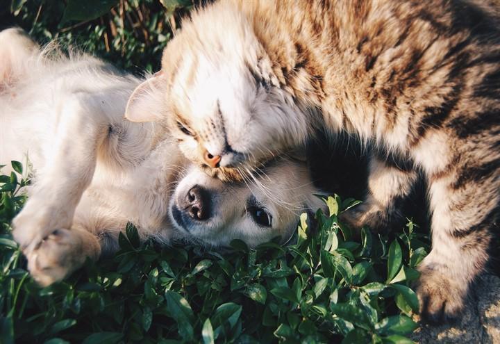 animali_cane_gatto_pixabay