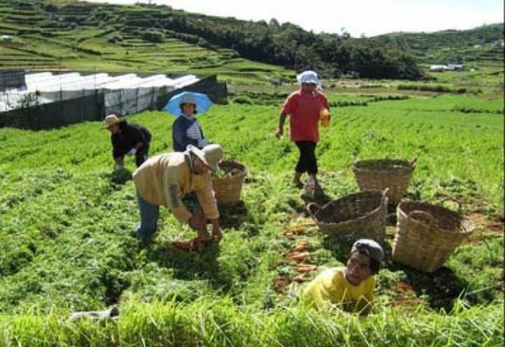 FILIPPINE_-_contadini_nei_campi