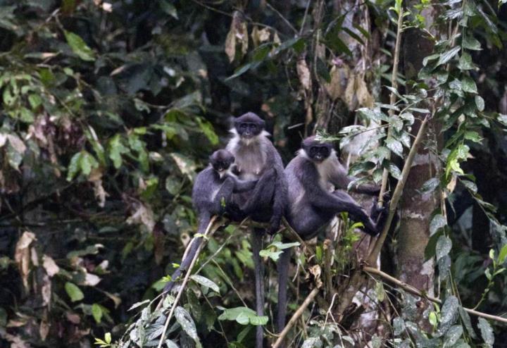 La-scimmia-perduta-e-ritrovata_1