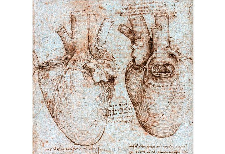 Scienz scuola elementi di innovazione didattica nello for Vasi coronarici