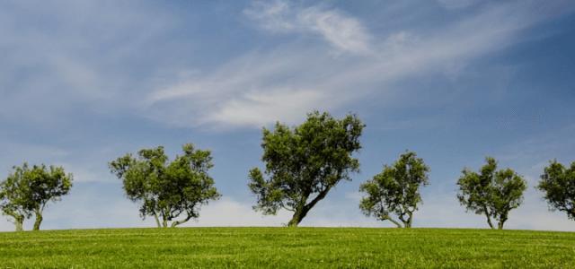 giornata_mondiale_ambiente_pixabay_2017