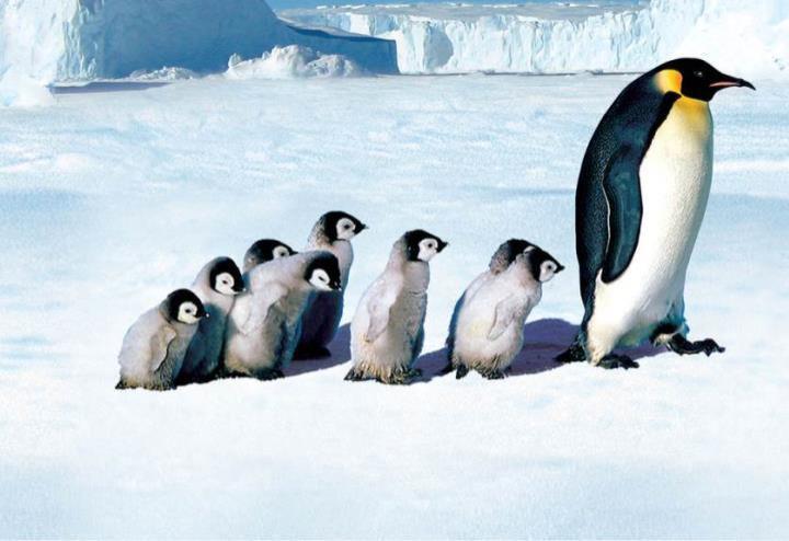 la_marcia_dei_pinguini_film