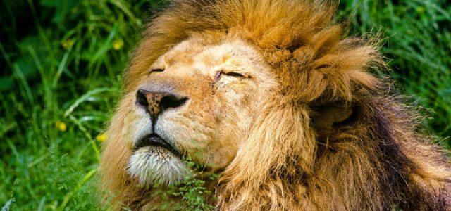leone-pixabay