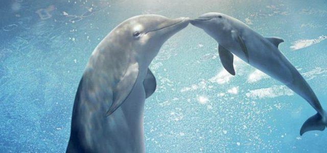 lincredibile_storia_di_winter_il_delfino_2