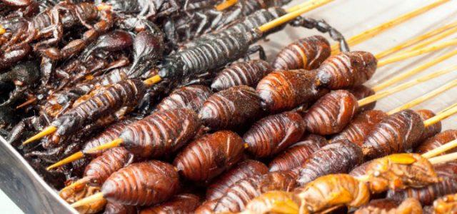 mangiare-insetti-fb