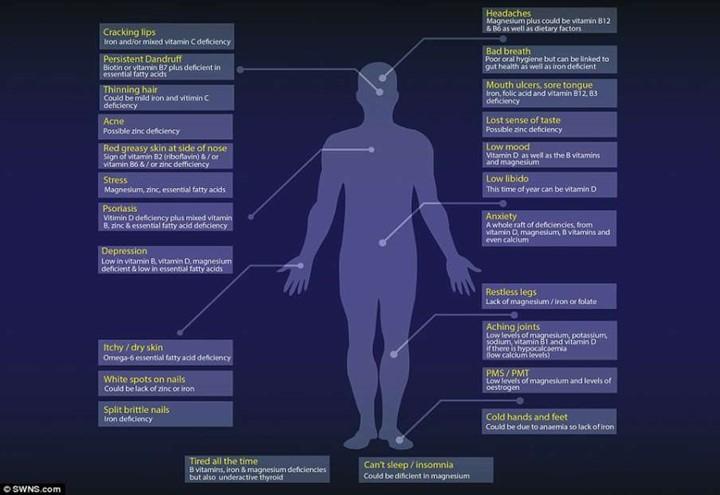mappa_corpo_umano_vitamine_dailymail