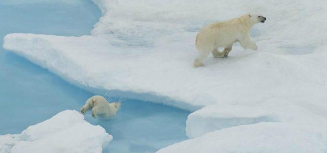 orso_polare_artico_antartide_ghiaccio_lapresse_2017