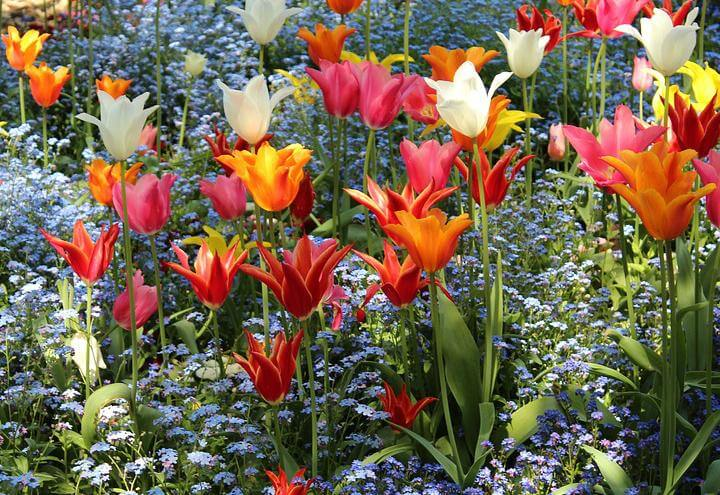 orto_botanico_giardino_pixabay_2017