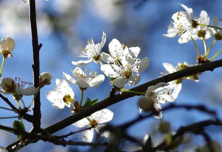 Equinozio di primavera 2019/ Oggi 20 marzo: perché non il 21 (e ...