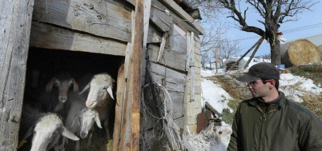 terremoto_agricoltore_allevamento_pecore_lapresse_2017