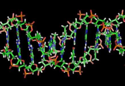 DNA_double_helixR439