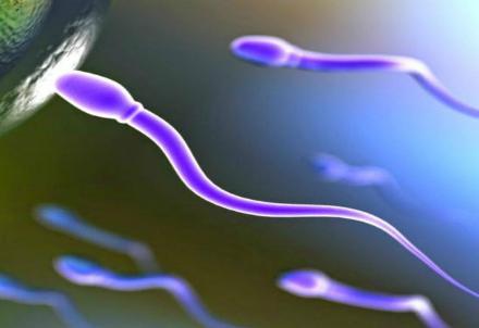 Donatore-di-sperma-R439