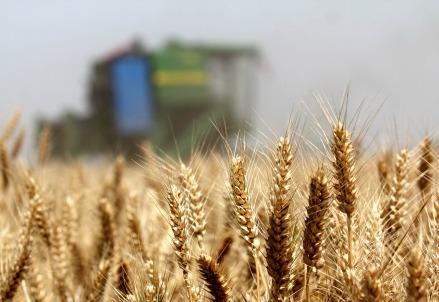 agricoltura_expo_ciboR439