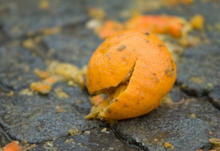 arancia_frutto_r439