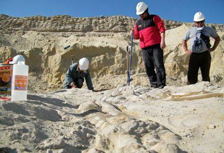CIMITERO DELLE BALENE/ Cile: ecco perché l'incredibile presenza di fossili  a Cerro Ballena
