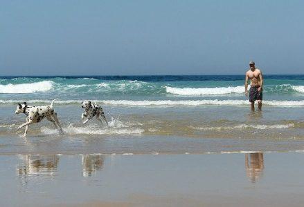 cani_spiaggia439