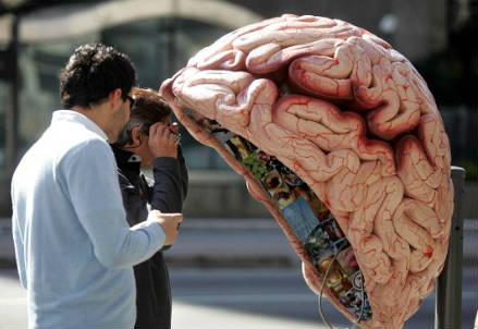 cervello_nuova_r439
