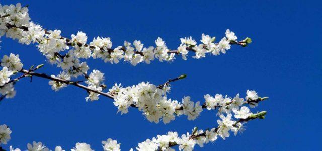 cielo_primavera