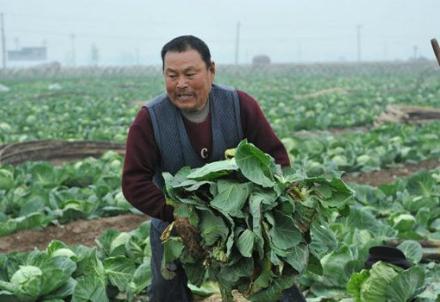 contadino-cinese_R439