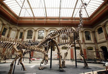dinosauroR439