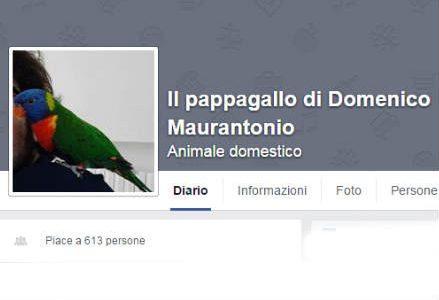 domenico_facebook_r439