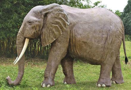 elefante_R439