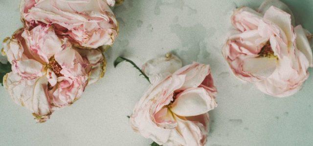 fiori_appassiti_pixabay_2017