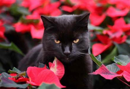 gatto_nero_r439