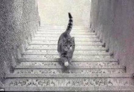 gatto_scale_R439