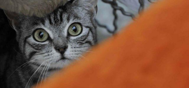 gatto_sguardo