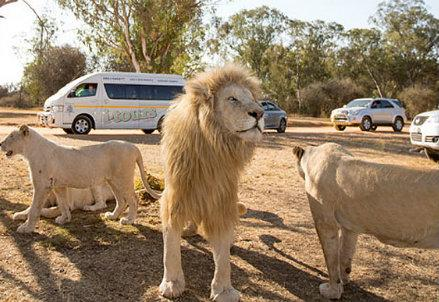 lion-park_R439