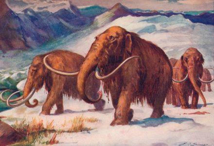 mammoth-ok_R439