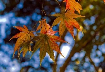 natura_foglie_autunnoR400