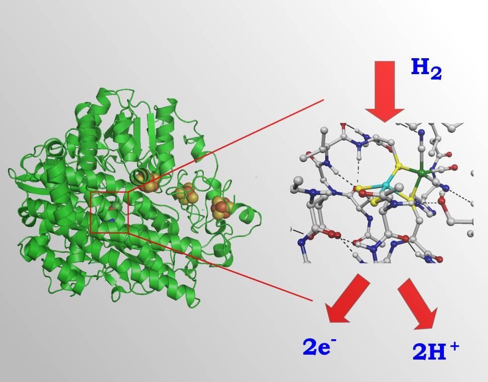nifeidrogenasijpg