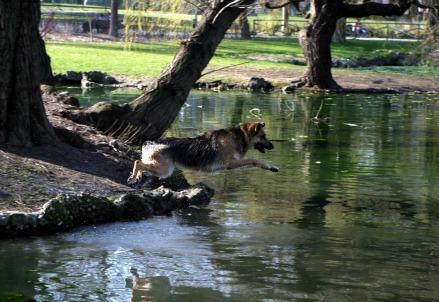 parco-natura-cane-lago