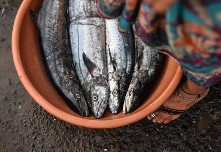 pesce_cibo_mangiare_virus_dieta