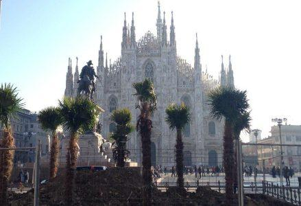 piazza-duomo-palme_R439