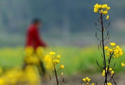 primavera_fioriR439