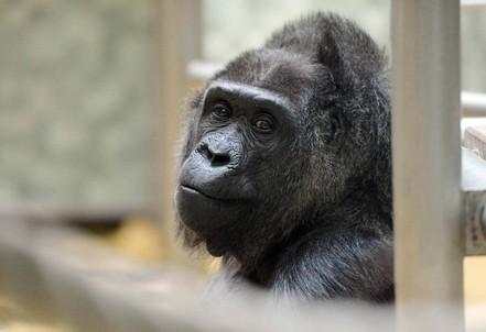 scuola_scimmia1R400