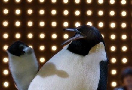 Pinguino_PinoR439