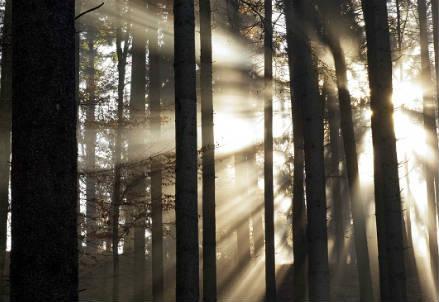 alberi_nebbia_r439