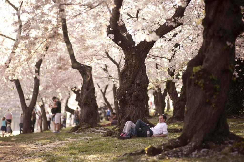 alberi_in_fiore