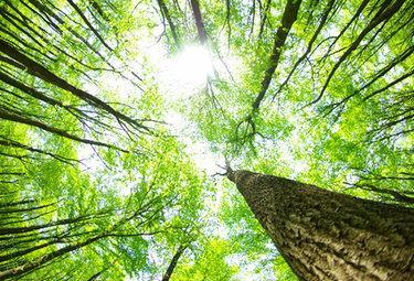 alberidalbassoR375_23ago09