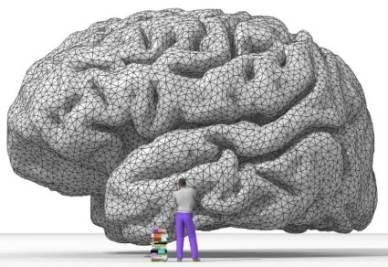 cervello_umano_intelligenzaR400