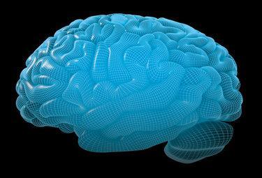 cervellobluR375_28gen09