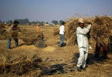 contadini-india-r400