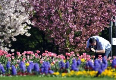 fiori-primavera-r400