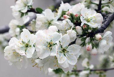 fiori_bianchiR375