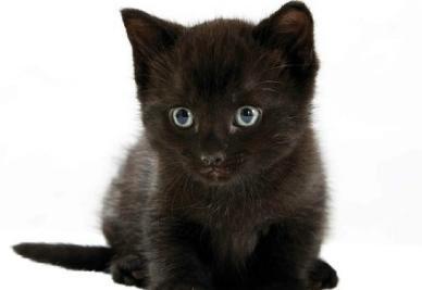 gatto_neror400