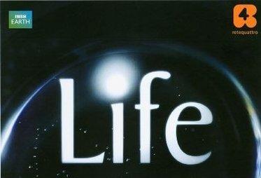 life_R375